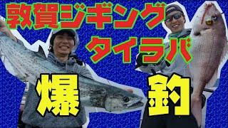 初冬の爆釣劇!敦賀でジギング&タイラバ!