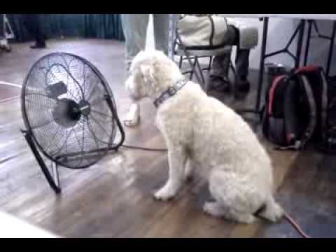 Cool Dog Sittin In Front Of A Fan