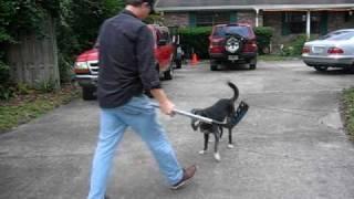 Dog Hockey With Lucy... Florida Street Fun!