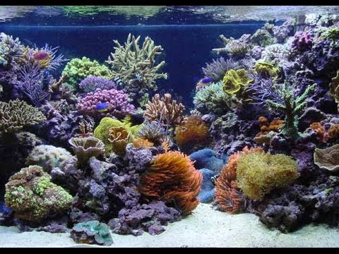 120 gallon reef tank just set up youtube