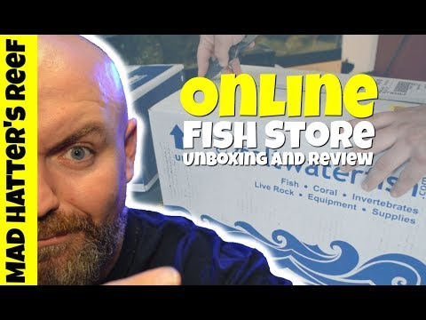 Online Fish Store Unboxing And Review | Saltwaterfish.com