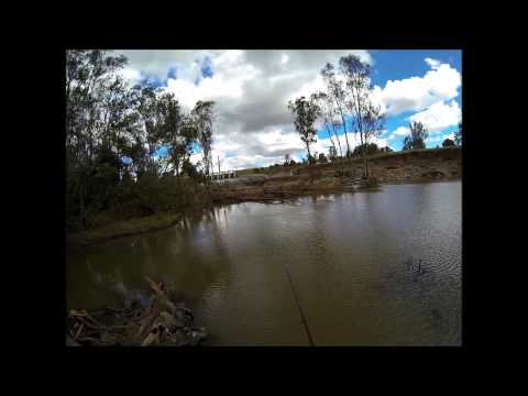 yellow belly fishing calide