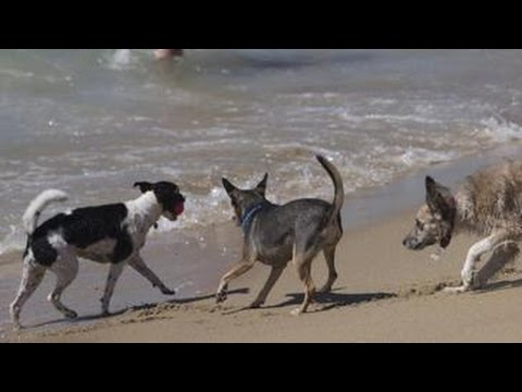 PERROS, DIA DE PLAYA from YouTube · Duration:  3 minutes 55 seconds
