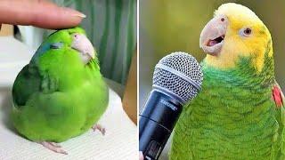 Baby Animals 🔴 Funny Parrots and Cute Birds Compilation (2021) Loros Adorables Recopilación #25