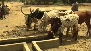 BURKINA FASO : projet d'appui à la productivité de l'élevage