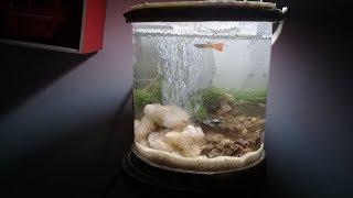 Cara membuat aquarium dari ember how to make a mini aquarium