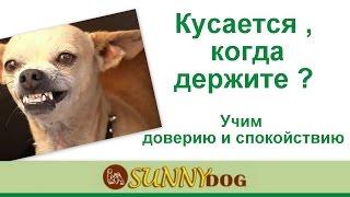 кусается когда держите  учим собаку спокойствию  дрессировка собаки