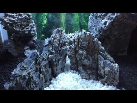 Idée de décoration pour un aquarium Panorama 35 de Superfish