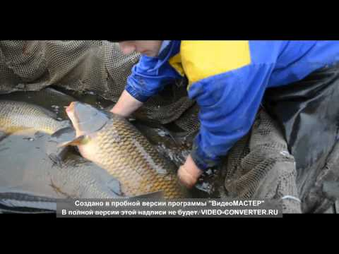 покупке термобелья инкубация карпа рыбы видео как