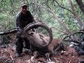 The best bezoar ibex hunting with Steve James Sadowski _ Recep Ecer Yaban Keçisi Avı