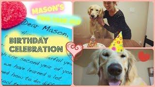 Golden Retriever Mason's 2-year-old Birthday Celebration Mini Film