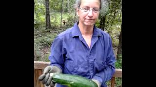 Zucchini: Make Fritters Or Pickles @ Okra Paradise Farms 2013-07-03