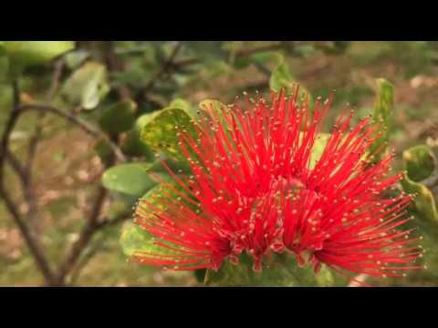Top 10 Endemic Plants at the Ho'omaluhia Botanical Gardens in Hawaii