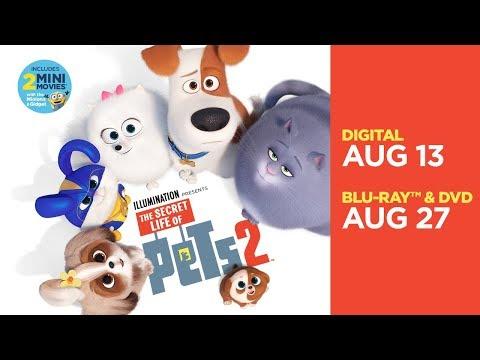 The Secret Life of Pets 2 | Trailer | Own it now on 4K, Blu-ray, DVD & Digital