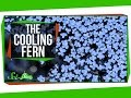 The Fern That Cooled the Planet