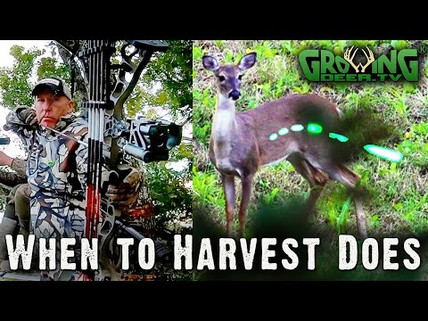 Should Deer Hunters Harvest Does? Yes! See Why And When To Harvest Does  (#577)