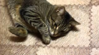 Кошка отвечает на позывы часть 2)