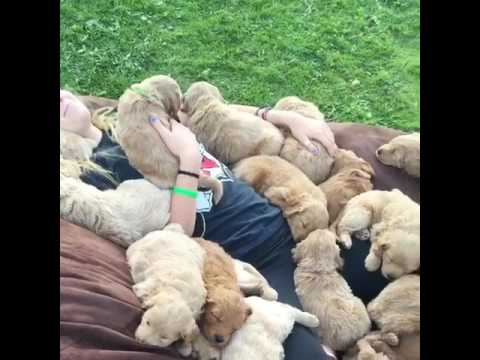 Puppies Lie with Caretaker on Giant Pillow