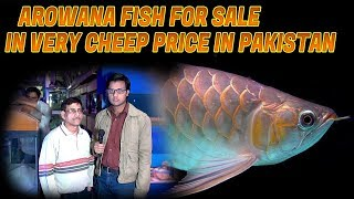 Arowana Fish for Sale in very Cheap price in Pakistan (jamshed Asmi Informative Channel)