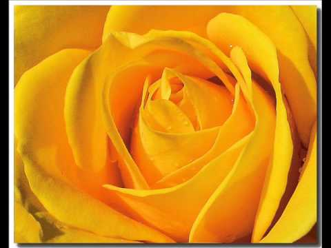 Yellow Rose of Texas - Lane Brody and Johnny Lee