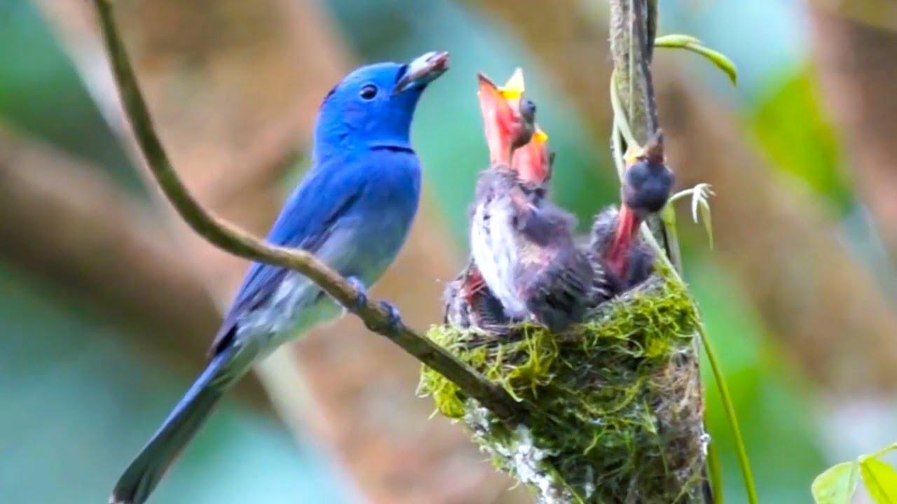 Wild birds in spring forest