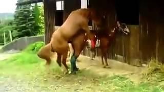 Repeat youtube video Animals funny video Caballos Culeadores