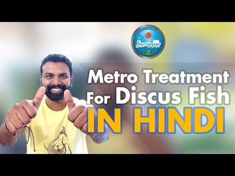 Metro Treatment For Discus Fish In Hindi || HEX Treatment