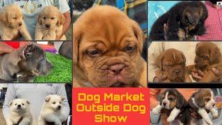 Wholesale Dog Market At Nawashahr Dog Show on 20 February 2021