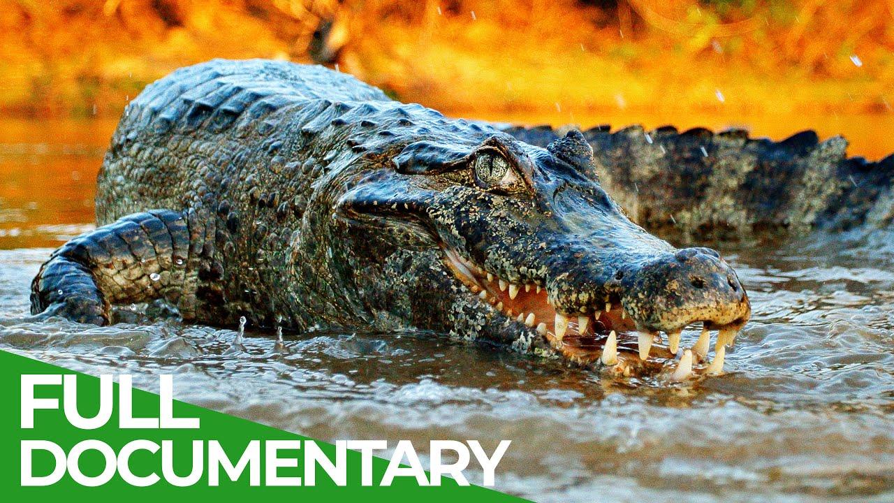 Wildlife Predators: Crocodiles, Alligators, Caimans & Gharials   Free Documentary Nature