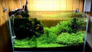 Аквариум ADA 80x40x40(Растительный аквариум 130л, 80х40х40. Растения: Глоссостигма, Стаурогин Репенс, Гидрокотила Трипартита, Хемиант..., 2015-08-06T22:24:50.000Z)