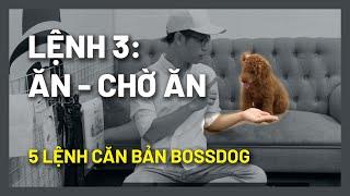 Cách huấn luyện chó cơ bản - Không ăn bậy - Lệnh số 3: Ăn/Chờ Ăn | BossDog