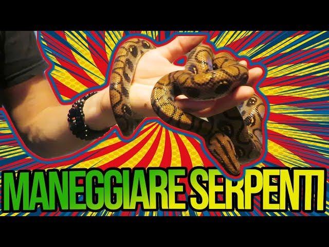 MANEGGIARE SERPENTI - il linguaggio del corpo dei serpi