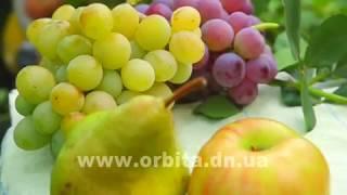 Осень - пора виноделия. Делимся секретами(, 2017-10-13T07:06:19.000Z)