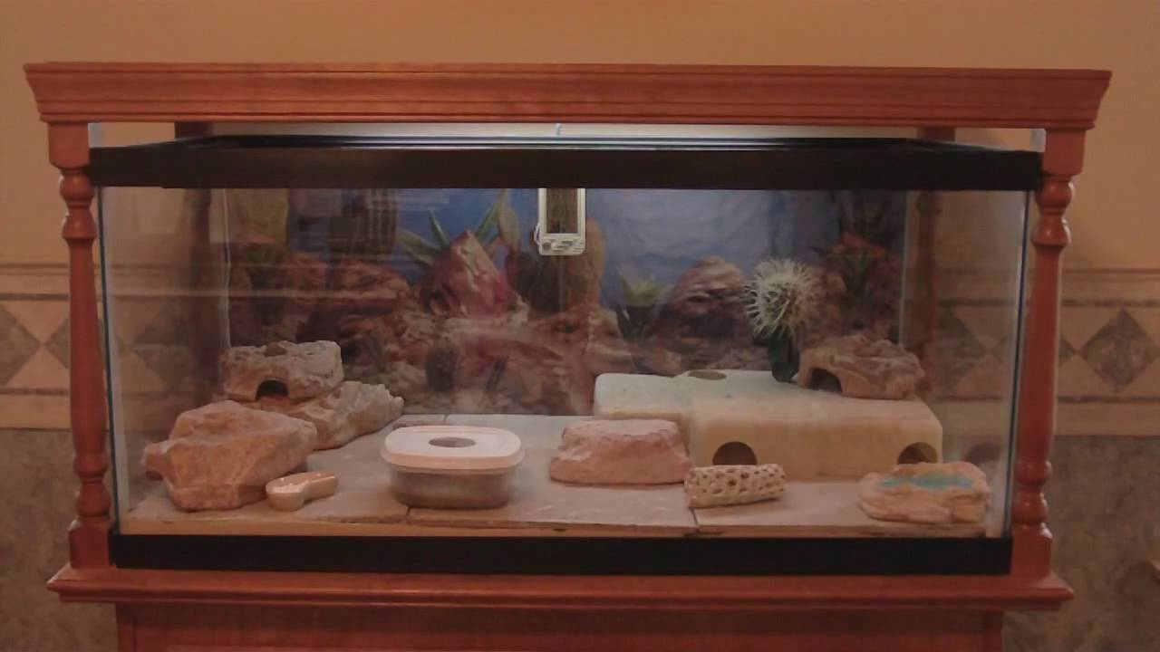 40 Gallon Leopard Gecko Tank And Custom Built Stand Youtube