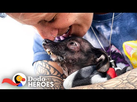 Woman Keeps Rescuing All The Dogs No One Else Wants | The Dodo Heroes