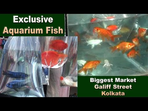 Amazing Aquarium Fish Collection Part 3 At Galiff Street Shyambazar