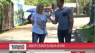 Зверский бэби-бум. Большой город live 21/05/2018 GuberniaTV