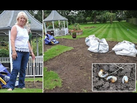 Keen gardener returns home from two week holiday to discover her immaculate lawn