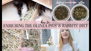 HOW TO: ENRICH GUINEA PIGS AND RABBITS DIET | SUMMER 2018