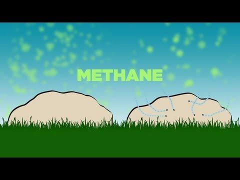 Science Bulletins: Dung Beetles Mediate Methane
