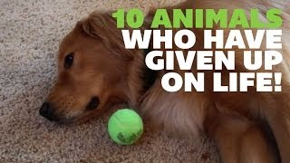 10 Animals Who Have Given Up On Life