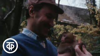 В мире животных. В Сухумском обезьяньем городке (1981)