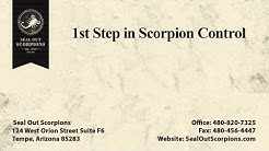 1st Step In Scorpion Control | Seal Out Scorpions