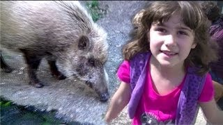 Several times we saw wild boars in the mountains or at the very edg...