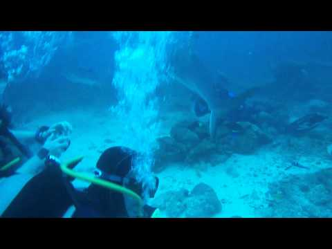 The Shark-Roatan, Honduras-Junio 2015