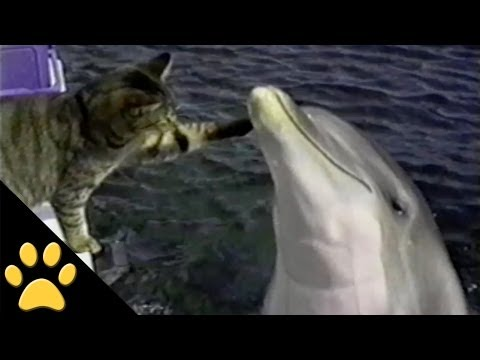 Funny Animal Compilation 2: Best Of Petsami