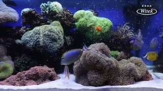 Morskie Akwarium w Hotelu Witek - kolorowe rybki i piekna rafa koralowa
