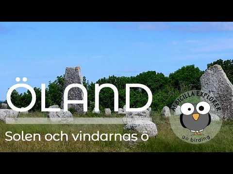 #1 Travel - birding in Sweden, Öland, full version