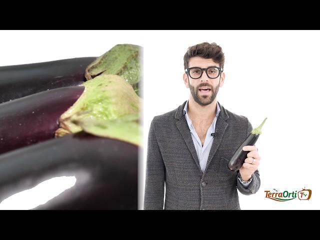 TERRA ORTI TV - NUTRIZIONISTA - MELANZANA