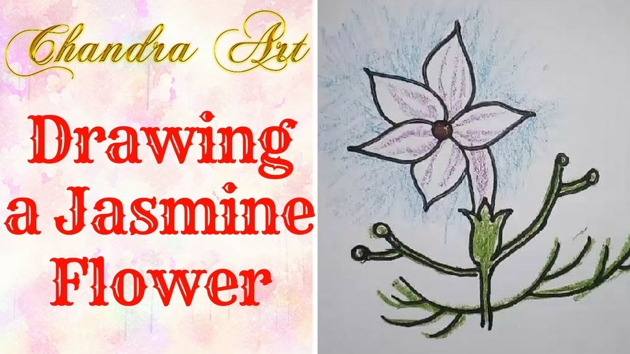 Simple Flower Drawing For Kids Drawing A Jasmine Flower Youtube